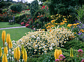 Yellow flower bed, Kniphofia, Alstroemeria