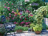 Rose 'Leonardo da Vinci', Centranthus (spur flower)