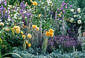 Campanula persicifolia (bellflower)