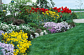 Spring bed with Alyssum saxatile, Phlox subulata, Iberis