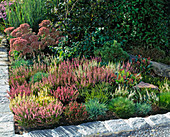 Planting heather bed