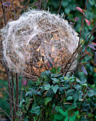 Light object, made of chicken wire Ball shapes with clematis tendril