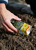 Sowing corn salad, sowing corn salad in the grooves