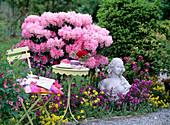 Rhododendron yakushimanum 'Polaris', Erysimum 'Bowles Mauve'