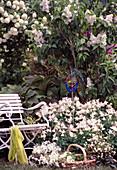 Aquilegia 'Spring Magic' (columbine), Syringa (lilac), viburnum