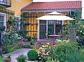 Terrace with Lavandula (Lavender), Rosa (Roses, Acer palmatum)