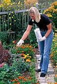 Young woman fertilizing cottage garden