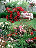 Rose (rose stem 'heather' and other roses