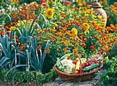 Tagetes (Marigold), Allium porrum (allium)