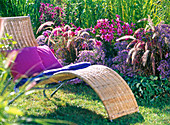 Lounger in front of autumn bed, Aster sedifolius (asters)