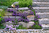 Step stone wall with perennials