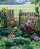 Autumn vegetable garden