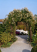 Archway with Polygonum aubertii