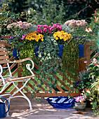 Gentiana, Sedum, Lysimachia, Autumn chrysanthemums, Hedera, Helichrysum