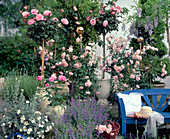 Stem Rose 'Piroschka', Shrub Rose 'Bonica'
