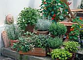 Herb arrangement in terracotta on stairs