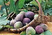 Ficus Carica (figs)