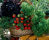 Basket of Tomato (Lycopersicon), Basil 'Oasis', 'Orient'