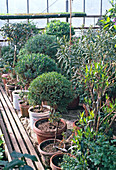 Potted plants in garden center