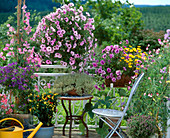 Solanum, Lathyrus, Thymus, Zucchini