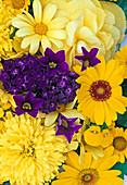 Tagetes, Heliotropium, Argyranthemum, Petunia, Begonia