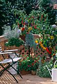Vegetable garden, pepperoni, paprika, mentha