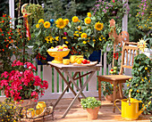 Cottage garden balcony, Helianthus