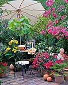 Tuscany balcony, Nerium (oleander), bougainvillea, citrus, palm trees