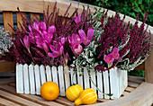 Colchicum 'Lilac Wonder', Calluna vulgaris (broom heath)