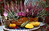 Calluna vulgaris, Colchicum cilicicum