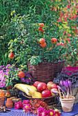 Autumn arrangement with Chaenomeles (ornamental quince), Brassica