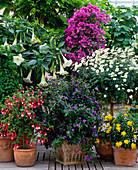 Fuchsia, Datura, Bougainvillea,