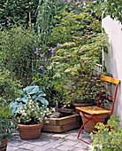 Acer, Bambusa, Hosta, Alchemilla mollis
