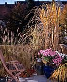 Gräserbalkon IM Herbst mit PENNISETUM, MISCANTHUS japonicus (Riesenchinaschilf)