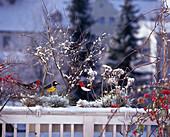 Balcony box in the winter