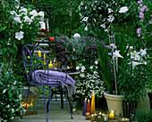 Evening balcony ,: moon wind, phlox, nicotiana