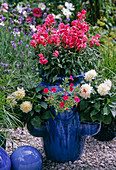 Pocket amphora with Antirrhinum, Dahlia,