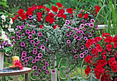 Flower box Petunia