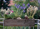 Hardy perennials in the balcony box