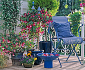Rosa - BLAUER Balkon: Fuchsia - HYBR. / FUCHSIEN