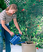 Water potted plants regularly and pervasively