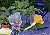 Fertilize camellias