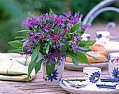 Centaurea montana (Mountain Knapweed)