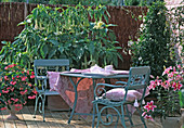 Seating with Datura, Lilium 'Stargazer'