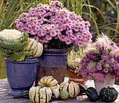 Brassica (ornamental cabbage), Aster dumosus (Cushionaster), Aster and Pennisetum bouquet
