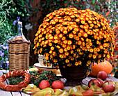 Chrysanthemum indicum (Herbstchrysantheme)