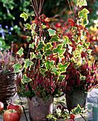 Calluna vulgaris 'Dark Beauty', Hedera