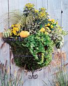 Stainless wire basket, Calluna vulgaris 'Sandy', 'Melanie', Lysimachia