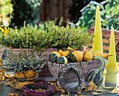 Calluna vulgaris 'Alice', Erica carnea 'Golden Scarlett'