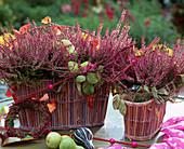 Calluna vulgaris 'Marlies', summer heather 'Garden Girls'